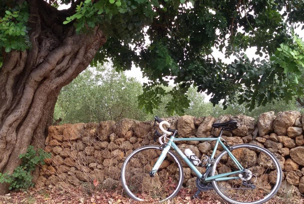 Salento in bicicletta tra vecchi uliveti