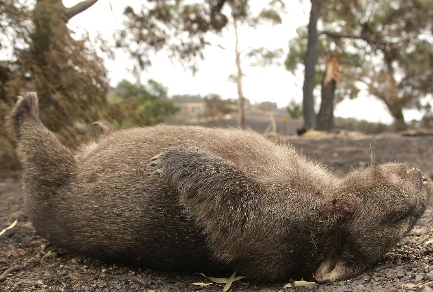 Morte in Australia